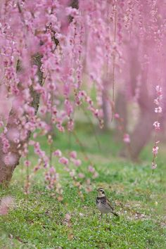 Under the tree of plum blossom (by AI  OGISO)