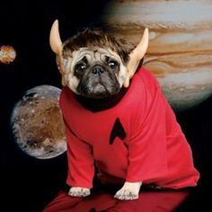 "Doggie Dress-Up! If you're stuck on what to garb your pup in this Halloween, here are some great ideas DogWatch came across as we scoured the internet for costume ideas for our own dogs. Pug Spock says ""I think this costume is highly illogical."""