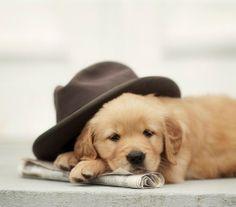 Pup Nap