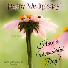 Funny good morning e cards greetings funny morning greetings wednesday funny good morning imagesgood morning image quotesmorning quoteswednesday greetingsblessed m4hsunfo