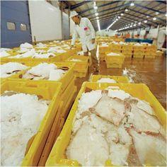 Sahin Flake Ice Machines, in all industries... Please contact us... http://www.sahinbuz.com