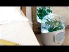 Un purificador natural - WATCH Personal Shopping by MooiMaak