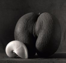 "Janusz Moniatowicz ""Sen o Seszelach"" Avocado, Fruit, Food, Essen, Yemek, Eten, Meals"