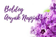 boldog anyák napját - Google-keresés Spring, Flowers, Jewelry, Google, Jewlery, Jewerly, Schmuck, Jewels, Jewelery