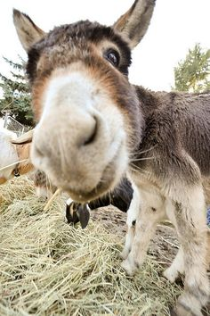 Quirky donkey. This face should make anybody smile :0) - Hehe!! :)