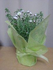 植物_1-ch184658 | 写真共有 - gooブログ「フォトチャンネル」 070318花みどり交流ネット_景品066_2