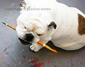 English Bulldog Photo - Fine Art Pet Photography - Piper Stone with Paintbrush - 5x7