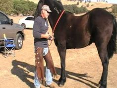 How to Pick up Horse's feet - Understanding weight transfer and pain - Rick Gore Horsemanship