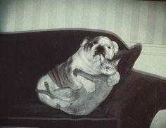 Bulldog and cat...you caught us!
