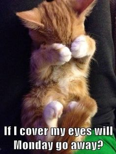If I Cover My Eyes Will Monday Go Away?