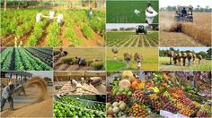 This report provides comprehensive overview of the agriculture industry in India and its market segments.