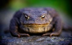 Get my 7 FREE basic photography tips - you NEED to know right here; http://pw5383.wixsite.com/free-photo-tips   Photographer Pernille Westh   Pretty Toad