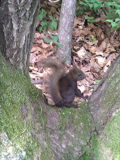Korean Squirrel:)