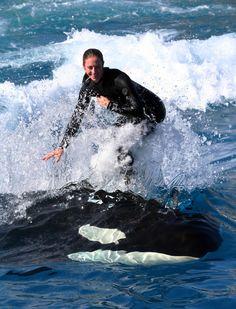 SeaWorld trainer, Liz, killer whale surfing.  SeaWorld San Diego