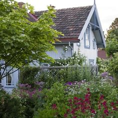 Wonderful romantic cottage garden of Helen Fredholm near  Gjøvik. Open for visitors in July and August on saturdays and sondays. Adressen er Viksborgvegen 14, 2848 Skreia TIMEkspressen mellom Oslo og Gjøvik passerer Fredh.