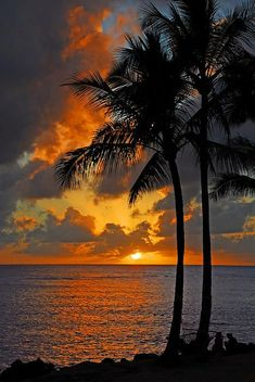 Tropical beach sunset in pink on the sea with palm trees. Description from pinterest.com. I searched for this on bing.com/images