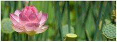 Cinco Entrenamientos hacia la plena conciencia