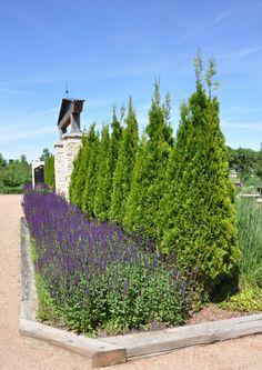 reiman gardens, iowa   Jones Rose Garden at Reiman Gardens