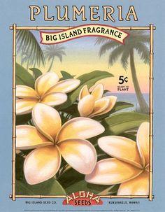 Giclee Print: Plumerias Art Print by Kerne Erickson by Kerne Erickson : Hawaiian Art, Hawaiian Theme, Hawaiian Flowers, Vintage Hawaiian, Hawaiian Designs, Vintage Travel Posters, Vintage Postcards, Vintage Ski, Vintage Labels