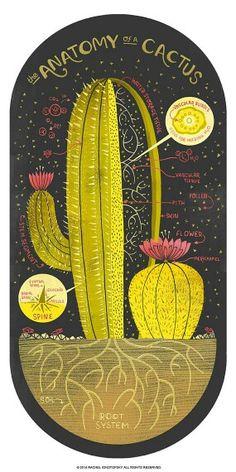 Cactus Painel