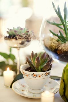 Love Succulents in a tea cup!