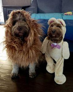 Sister, do you know what tomorrow is? Umm, the day we run away? No silly, it's Halloween! I'm not going out like this. What About Tomorrow, Happy Halloween, Doodles, Teddy Bear, Board, Animals, Animais, Animales, Animaux