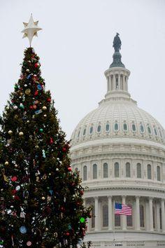 Albero Di Natale Washington Deluxe.10 Best Alberi Di Natale Images Christmas Tree Christmas Decorations Christmas Holidays