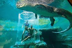 Crocosaurus Cove, located in Darwin, allows visitors a unique up close and personal view of Australia's Saltwater Crocodiles.