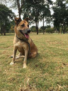 Bella, wonderfull, lovely, pet, rescue, animals