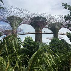 Singapore Singapore, Brooklyn Bridge, Marina Bay Sands, Building, Travel, Life, Viajes, Buildings, Destinations