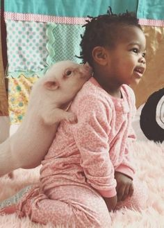Best Pets You Can Have Are Pigs - Stories of World