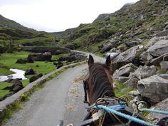 """Sonny"" the horse on the job in the Gap of Dunloe. www.IrishGenealogyTours.com"