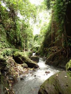 Monkey Forest, Ubud, Bali.
