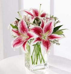 Beautiful blooming stargazer lilies arranged in a cube glass vase with delicate filler.