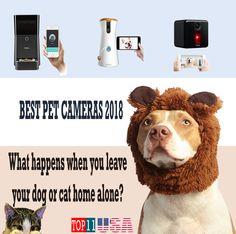 The best pet cameras in 2018.#pet #weeklyfluff #catgag #cute #beautiful #cat #catsofinstagram #cats #kitty #kitten #animal #kawaii #meow #instacat #catstagram #catlover #ilovemycat #catoftheday #neko #chat #gato #gatto #katze #kedi #kucing #rottweiler #dog #ysera #yserathecat #kittycat