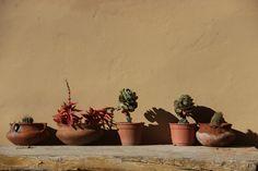 Detalle patio - Los Ranchos - Purmamarca - Jujuy - Argentina