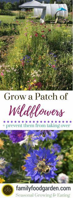Growing wildflower seed blends Growing wildflowers in your ga. Growing wildflower seed blends Growing wildflowers in your ga. Herb Garden Design, Herbs Garden, Vegetable Garden, Garden Path, Types Of Herbs, Diy Garden Projects, Garden Ideas, Wildflower Seeds, Gardening Tips