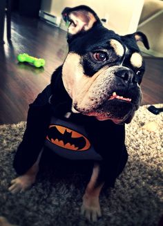 This will be my future dog on halloween. | baby bulldogs ...