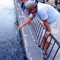 Fish Feeding at Capitol Lagoon, Bacolod City, Philippines