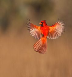 Stunning [by Bill & Sharon Draker, Nature Photographers]