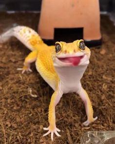 #animals #lizard #funny #cats #dogs #pets #farmhouse #reptiles #snake #jungle #rainforest Animal Jokes, Funny Animal Videos, Funny Animals, Logo Animal, Animal Jam, Terrarium Reptile, Funny Text Memes, Cute Reptiles, Cute Little Animals