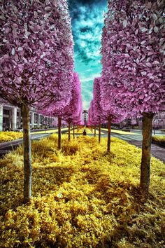 Infrared Photography, Plants, Plant, Planets