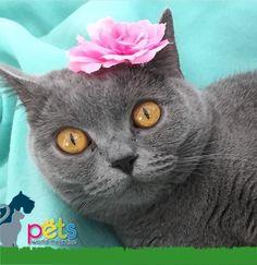Buenas noches 🌙  #PetsWorldMagazine #RevistaDeMascotas #Panama #Mascotas #MascotasPanama #MascotasPty #PetsMagazine #Gatos #GatosPty #GatosPanama #MascotasPty #MascotasAdorables #SuperTiernos #PicOfTheDay #Cats #CatLover #CatOfTheDay #Cute