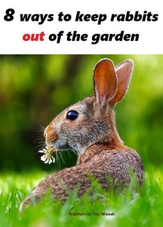 8 tips to keep rabbits out of your garden. From deterrents to scare tactics, everything you need to know to keep rabbits out of your garden!