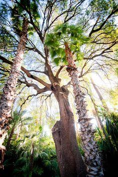 Jardin Majorelle (The Majorelle Garden) - Marrakesh, Morocco by Chris Zielecki on Flickr.