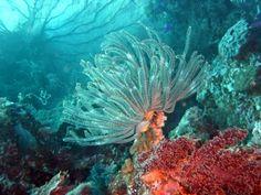 ocean colorful creatures - Google 검색