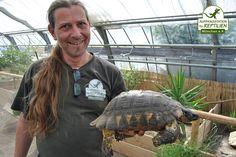 Deutlich größer ist die erwachsene Breitrandschildkröte.