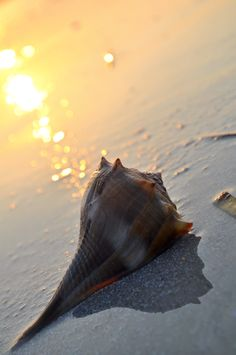shell on beach at sunset.