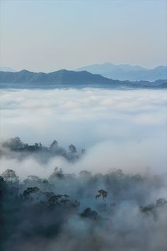 Morning Mist  - Kaeng Krachan - day trips or overnight accommodation available, north of Hua Hin