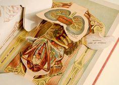medical pop-up books - Google zoeken